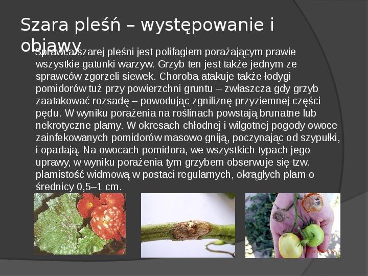 Choroby roślin warzywnych - Slajd 47