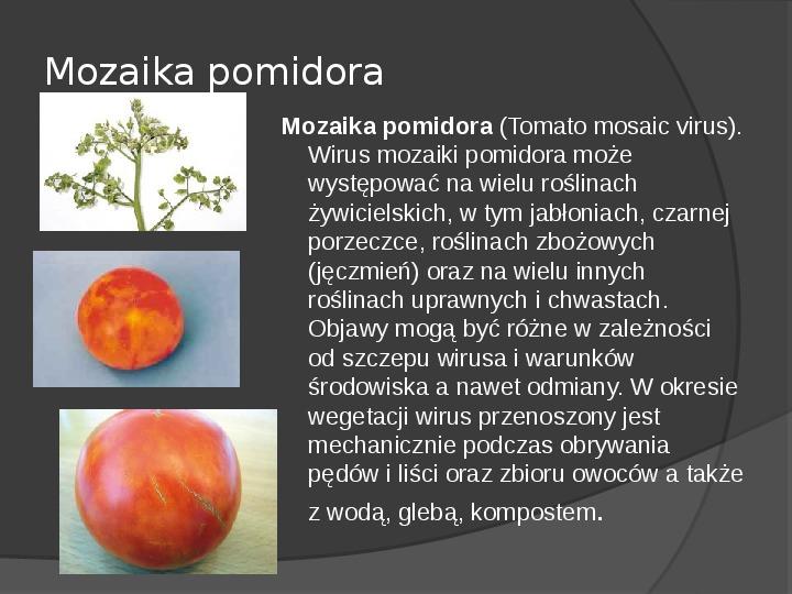 Choroby roślin warzywnych - Slajd 49