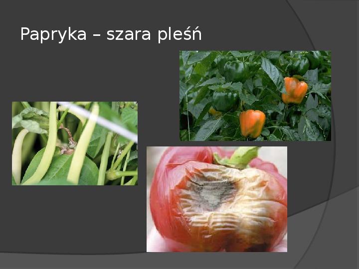 Choroby roślin warzywnych - Slajd 54