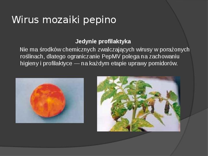 Choroby roślin warzywnych - Slajd 57