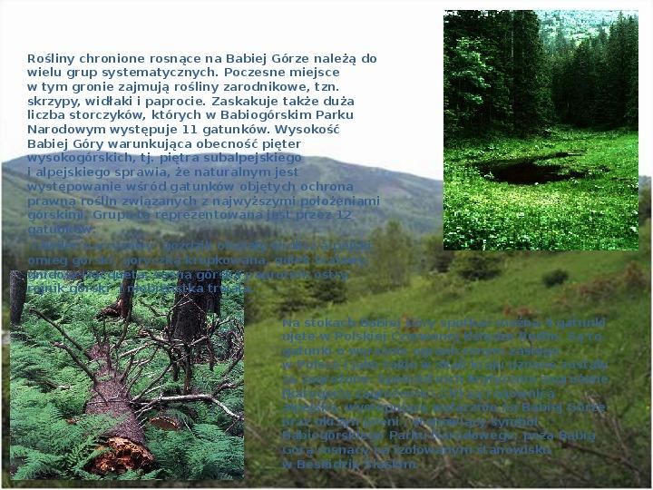 Babiogórski Park Narodowy - Slajd 4