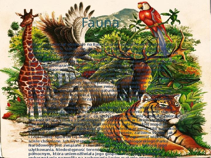 Babiogórski Park Narodowy - Slajd 6
