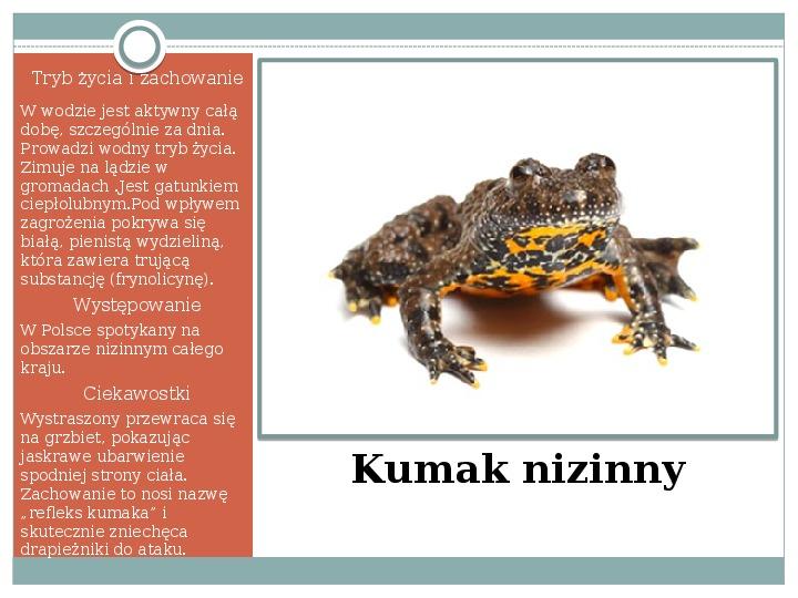 Płazy - zwierzęta zmiennocieplne - Slajd 21