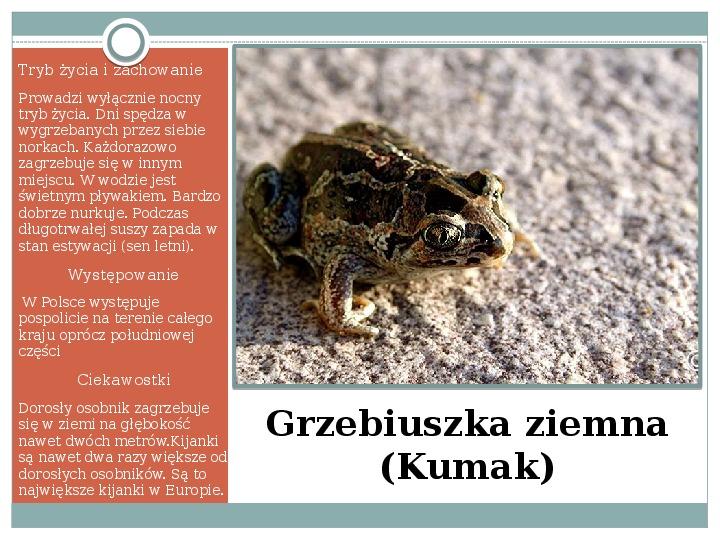 Płazy - zwierzęta zmiennocieplne - Slajd 23