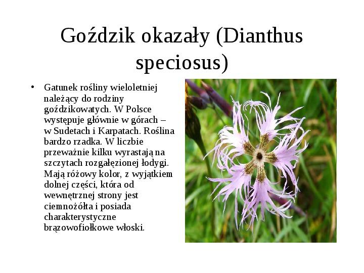 Tatrzański Park Narodowy - Slajd 9