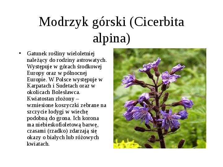 Tatrzański Park Narodowy - Slajd 11