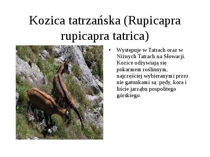 Tatrzański Park Narodowy - Slajd 19