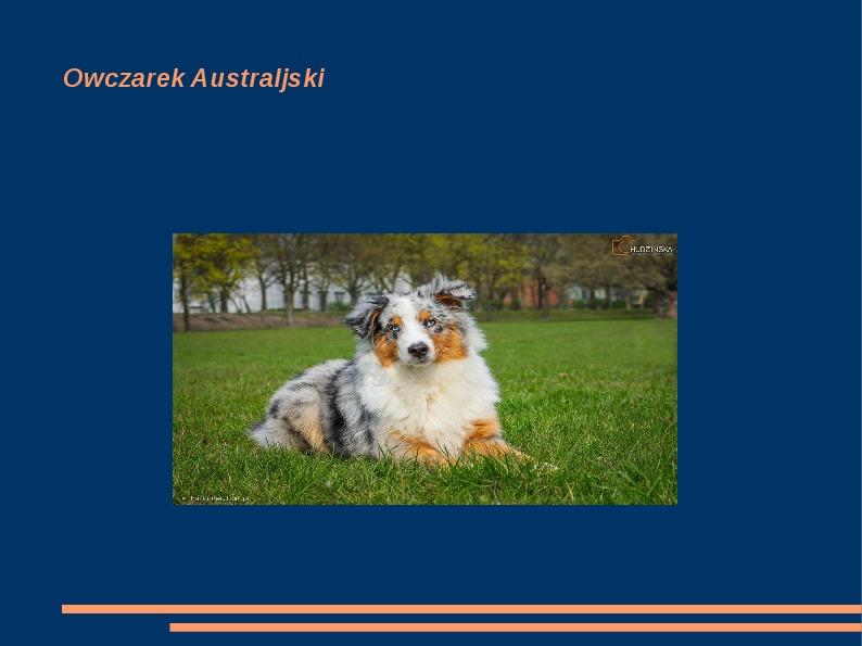 Rasy psów - Slajd 1